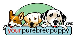 yourpurebredpuppy logo