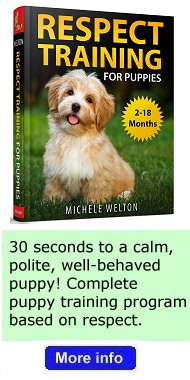 Dog books written by Michele Welton