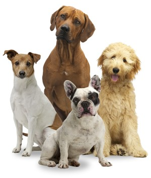 Four dog breeds sitting in a group