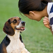 100 english words to teach your dog pdf