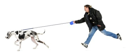 How To Teach A Dog To Walk Without A Lead