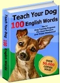 Teach Your Dog 100 English Words