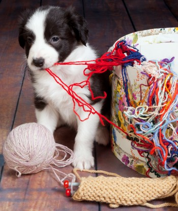 Respect Training For Puppies, by Michele Welton