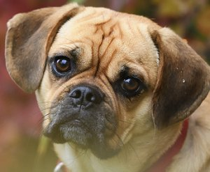 The Truth About Crossbred Dogs