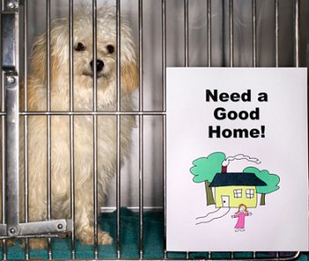 Adopting A Dog From The Animal Shelter Or Humane Society