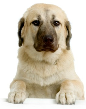What Is A Good Dog Food For Large Breeds
