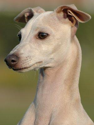 Mixed Breed Dog Racing