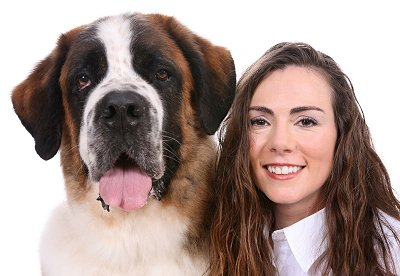 Saint Bernard dog breed