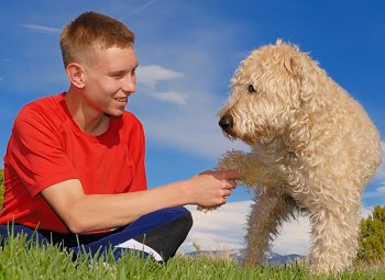 Soft-Coated Wheaten Terrier dog breed