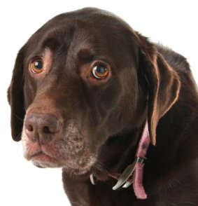 Housebreaking Potty Training For Puppies And Adult Dogs