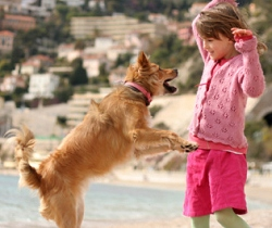 dog jumps on people