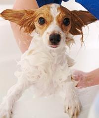 dog doesn't like baths