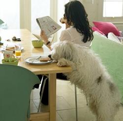 dog steals food