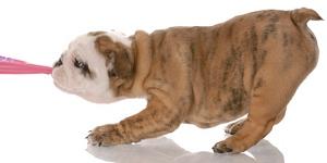 bad dog behavior