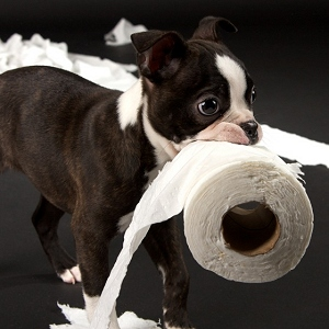 Puppy training schedule what to teach puppies and when training a puppy by teaching household rules ccuart Gallery